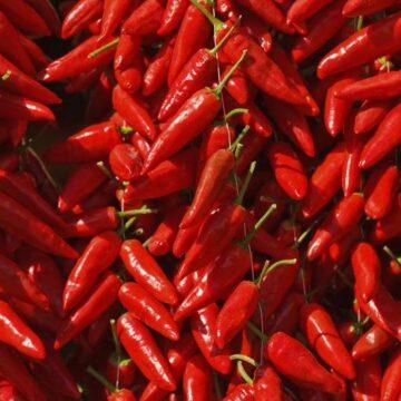 Calabrian red peperoncino