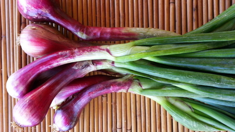 Tropea onions from Calabria