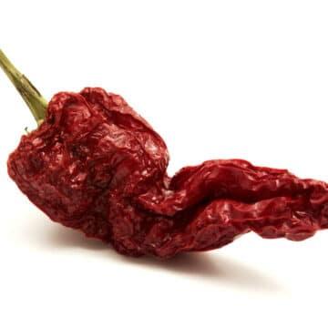 Senise pepper