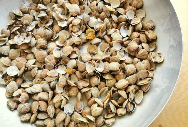 small clams cooking in large deep frying pan