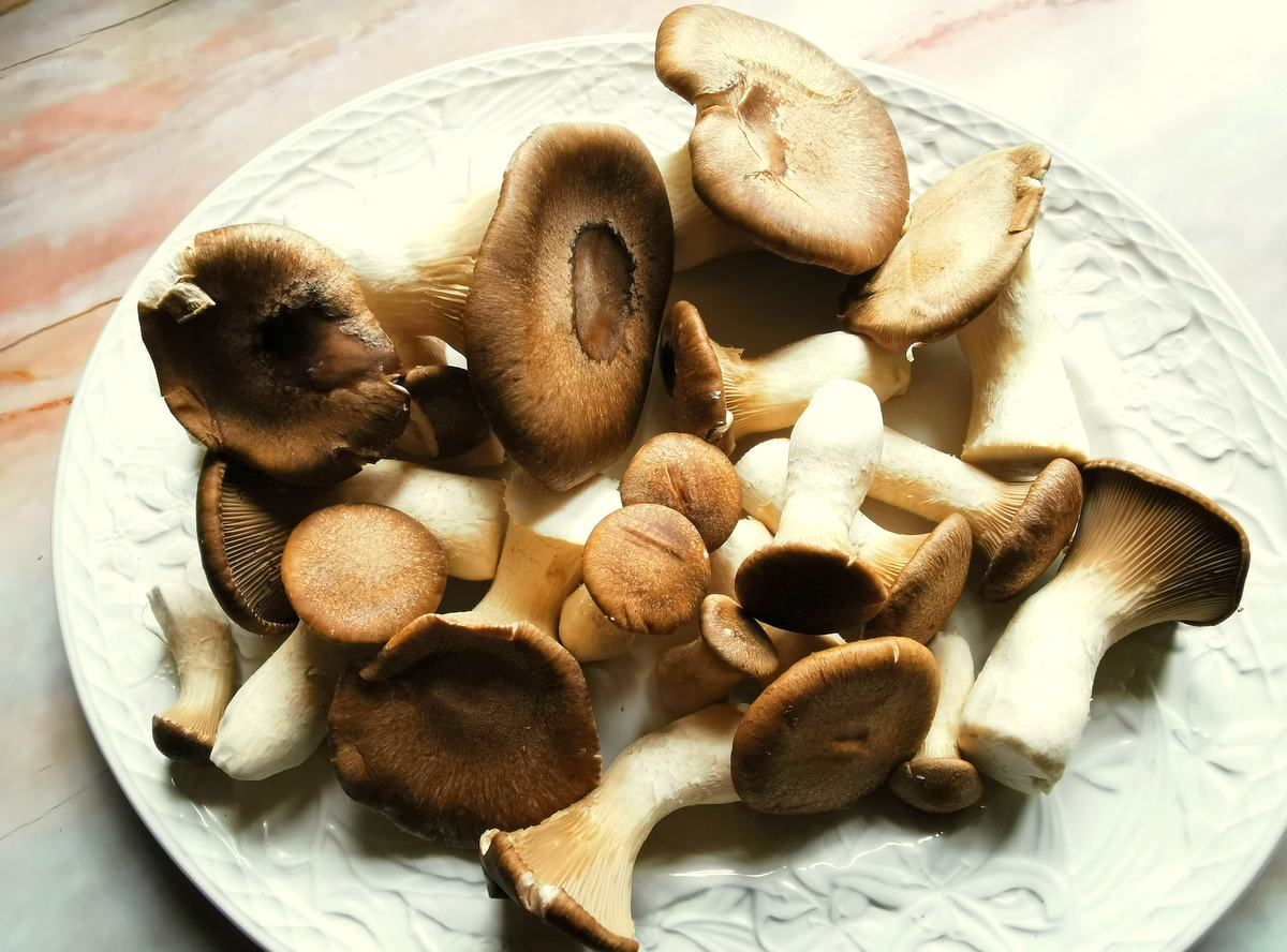King oyster (king trumpet) mushrooms on white plate